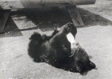 Yellowstone Cubs 02 (1963)