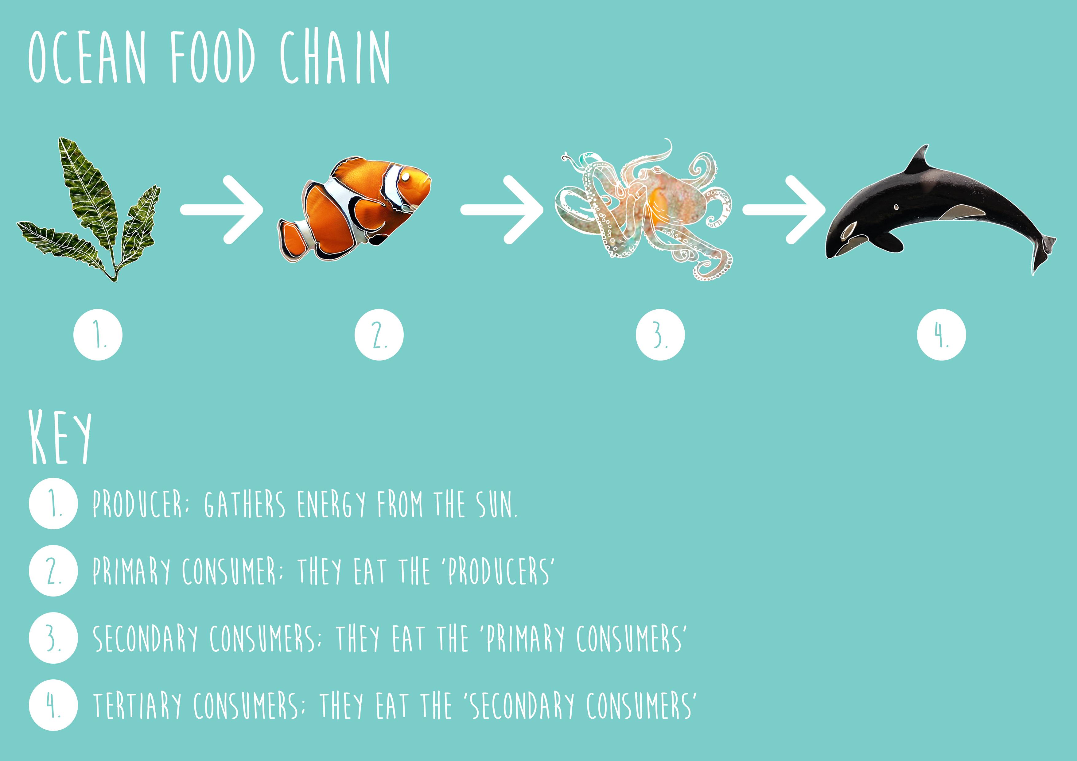 Food Chain Ocean