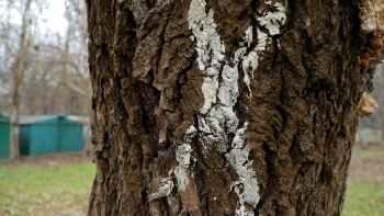 помеченное дерево