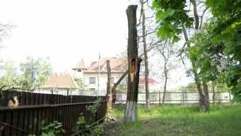 дерево ствол