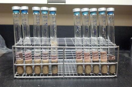 Os metanógenos contidos nestes tubos de ensaio, que também continham nutrientes para crescimento, areia e água, sobreviveram quando sujeitos a ciclos de arrefecimento-aquecimento marcianos