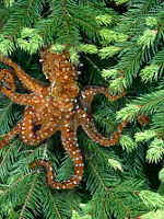 Tree octopus photo