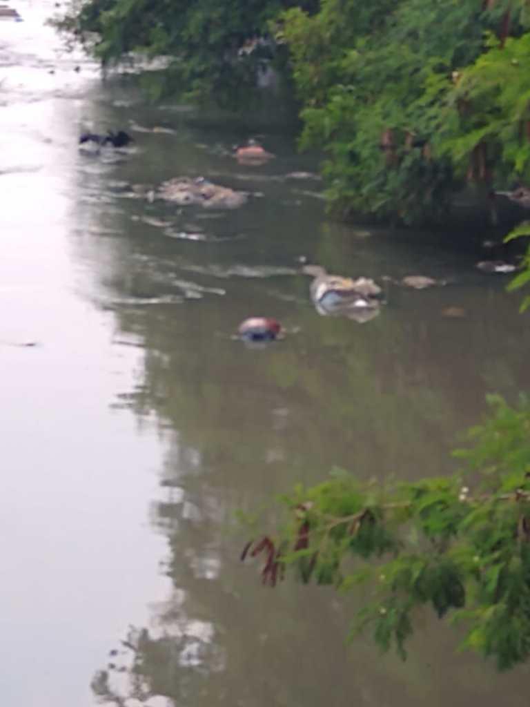 Urgente: corpo é encontrado boiando em igarapé; imagens fortes