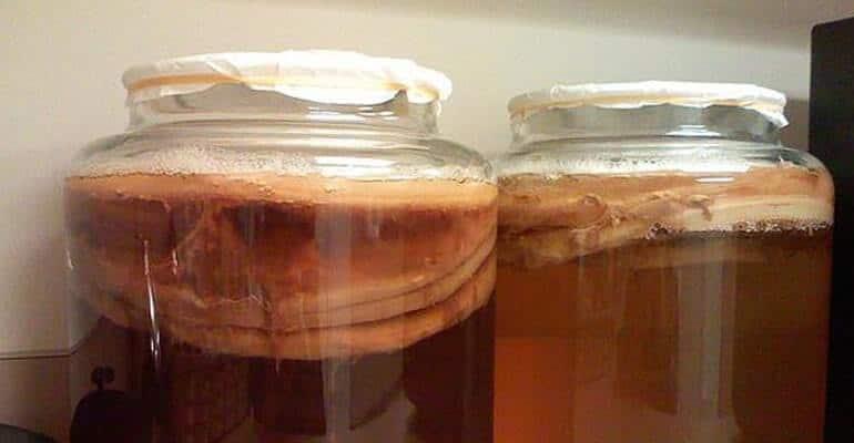 чайный гриб при запорах отзывы