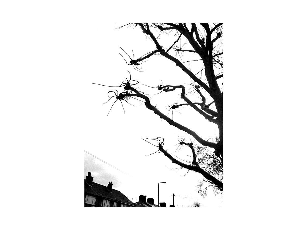 Spider Branches