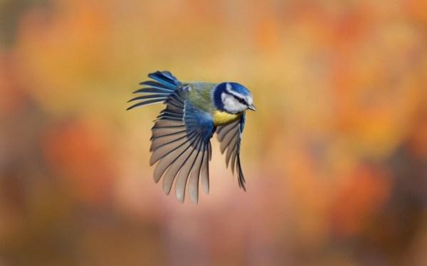 Обои птичка, крылья, взмах, скачать обои, фото и картинки ...