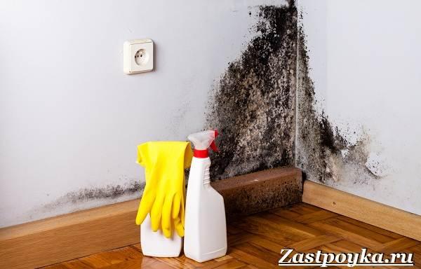 Плесень-в-квартире-Причины-появления-и-как-избавиться-от-плесени-на-стенах-3