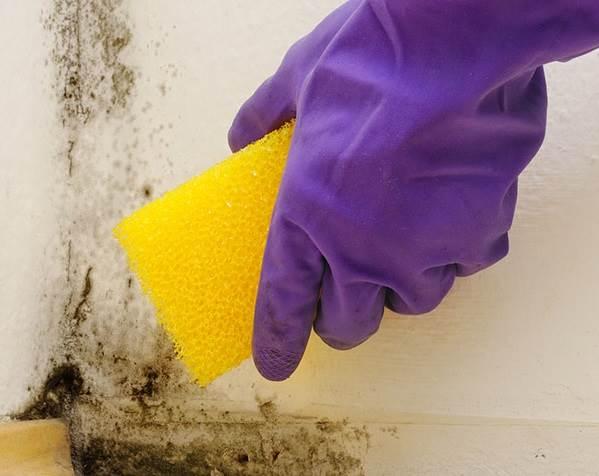 Что-такое-биоцид-Свойства-цена-и-применение-биоцидов-против-плесени-4