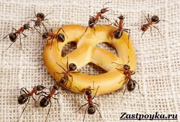 Как-избавиться-от-муравьев-дома-3