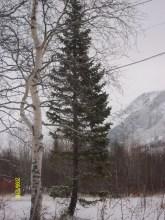 Полярно АльпийскийботаническийСад