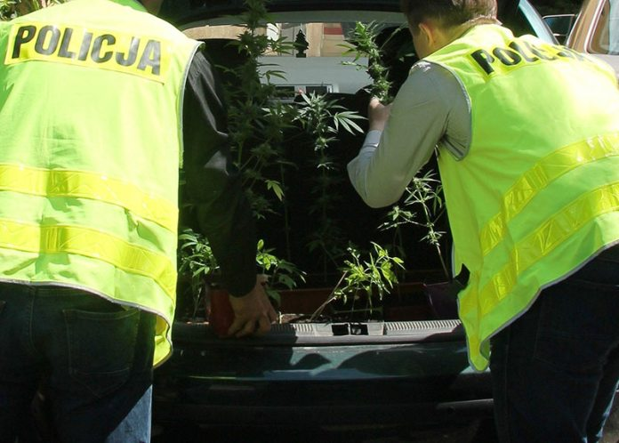 marihuana przeciszów