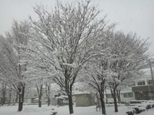 初雪の景色