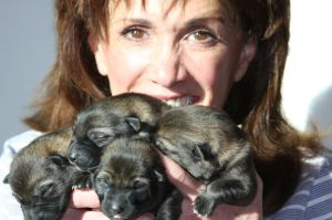 German Shepherd Puppies for sale in May 2015