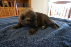 Puppies from top breeders