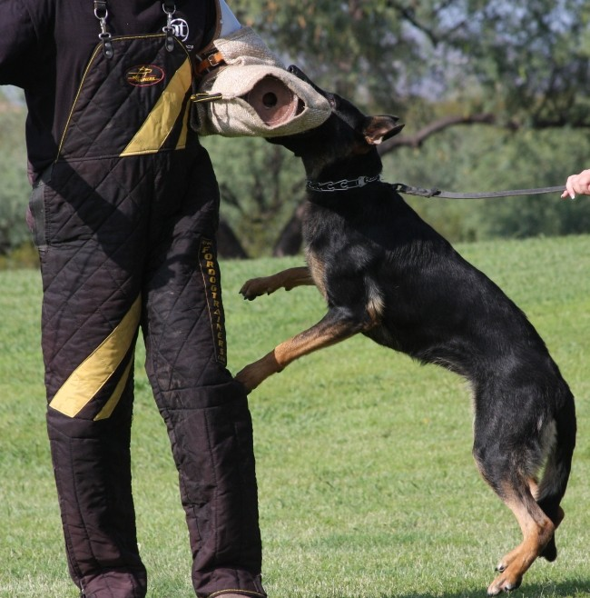 who is selling best protection dogs