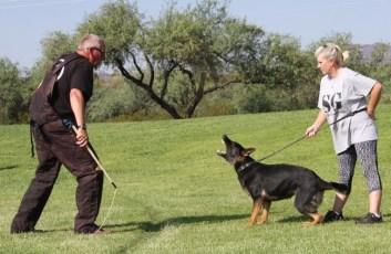 German Shepherd female is protective