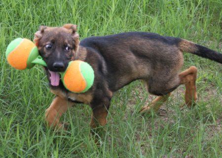 Intense Dog Training Florida