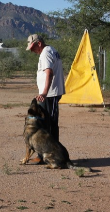 schutzhund training stud dog German shepherd working lines