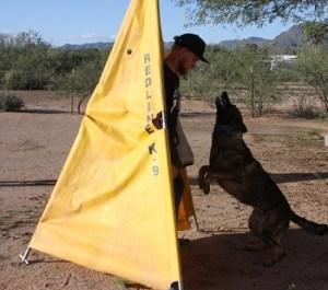 Stud German Shepherd serious hold and bark schutzhund training