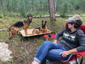 German Shepherd family companion