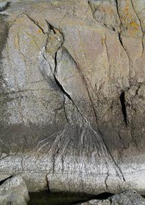 Grusskarte Felsenvogel