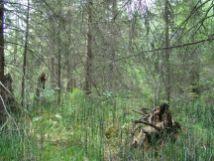 ирюмские ельники николай науменко 2