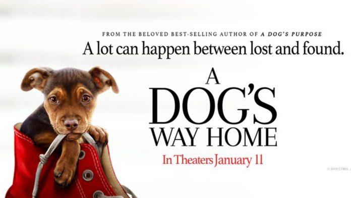 Image result for A Dog's Way Home (US) [Cinema] - Jan 11