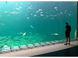 Der alte Mann und das Aquarium