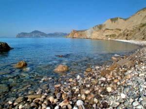 Водятся ли креветки в черном море