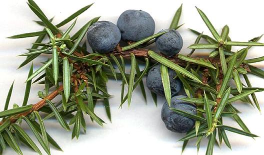 Brinove jagode