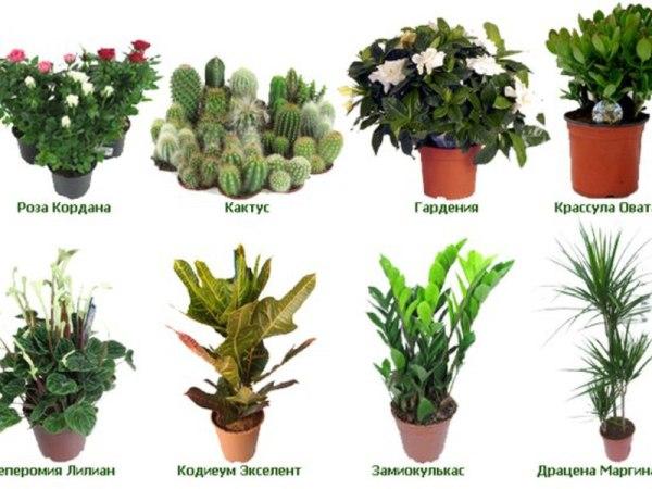 Комнатные цветы и растения | Здороват.ру - портал о ...