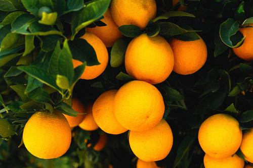 Яблоки польза и вред для организма. В зеленом яблоке какие витамины