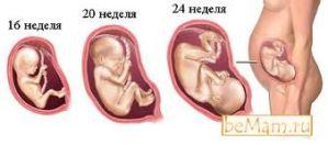 Как развивается малыш в утробе?