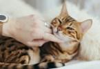 Vlasnici mačaka su zdraviji