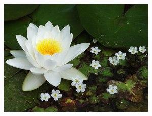 восприятие жизни как сад