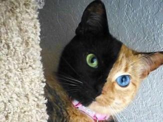 котката Venus