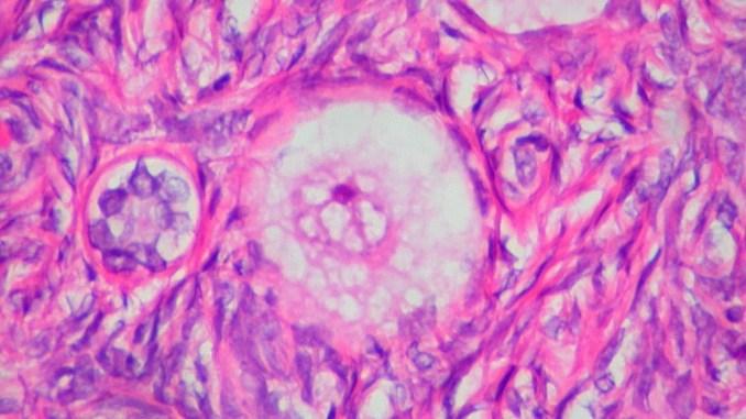 човешка яйцеклетка