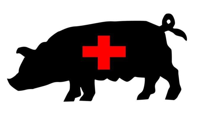 свински грип
