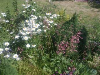 kwiaty w moim ogrodzie