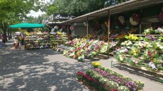Flowers outside of Powazki