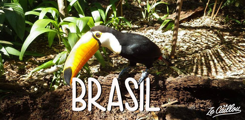 Observe toucans in Brasil and other ideas from Ze Caillou