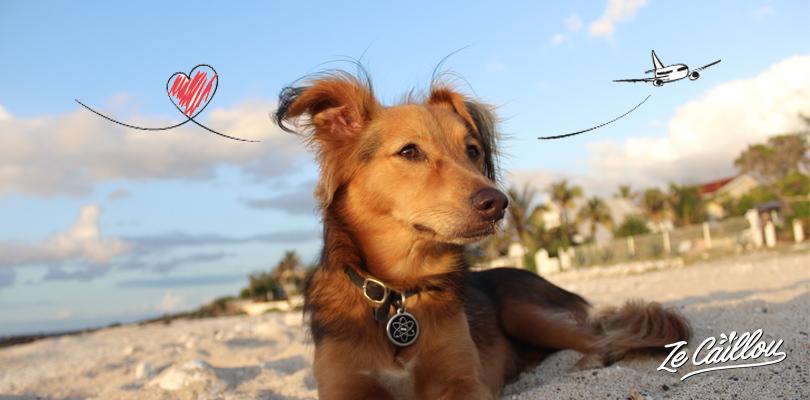 Ce qu'il faut savoir lorsque l'on voyage en avion avec son chien par Ze Caillou