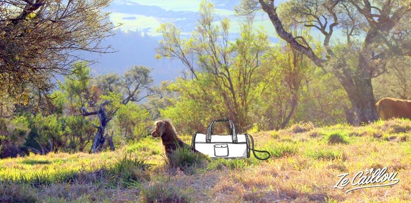 Les affaires essentielles pour son chien lorsqu'on prépare un voyage Ze Caillou
