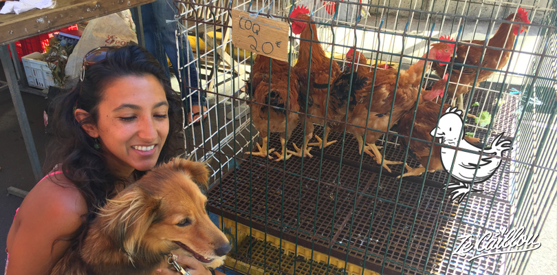 Buying chickens and roosters on local Reunion Island's markets