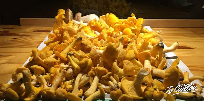 Partez à la cueillette des champignons en Suède. Girolles, bolets, cèpes...