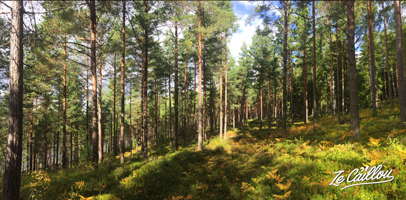 Enjoy the beautiful fauna of Sweden and walk in its great forests