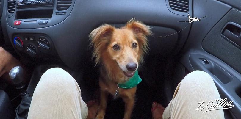 Notre chienne est prête pour voyager en avion, tout savoir sur notre blog de voyage.