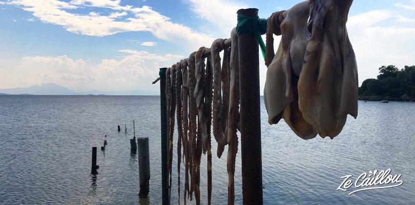Poulpe frais qui sèche sur des tréteaux en bois le long de la mer.