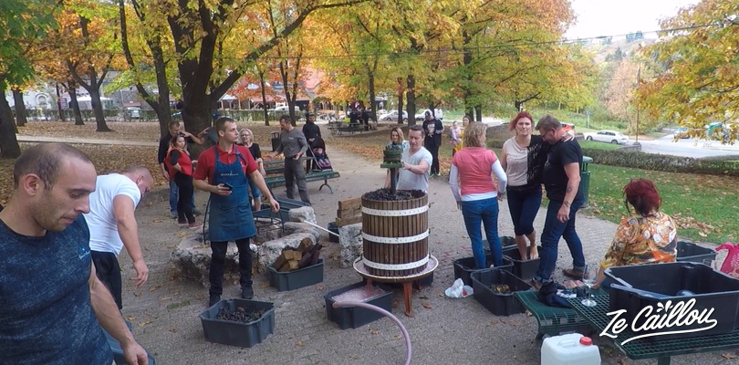 Old-fashion way to crash grapes to make wine in Eger, Hungay.