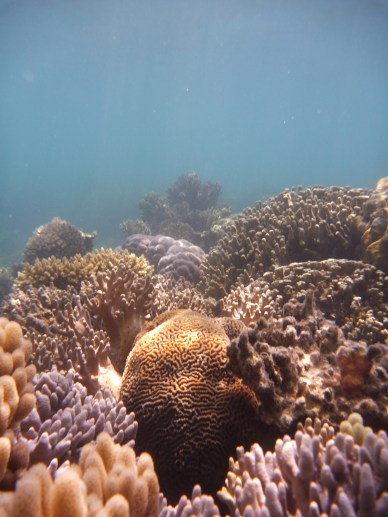 Fiji 2011 - Bounty Island trip